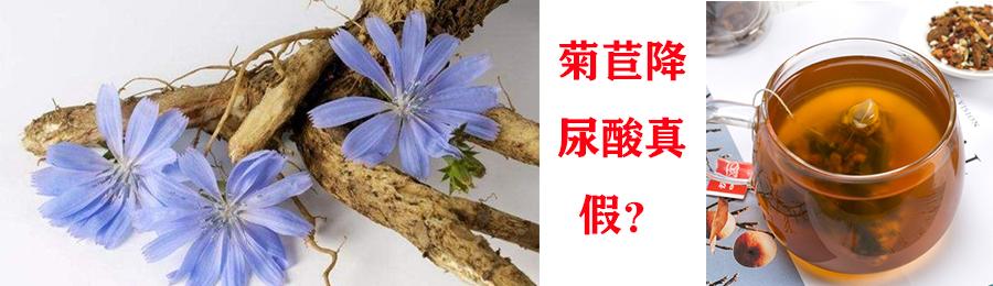 网传菊苣能降尿酸和治疗痛风,没想到事实竟然是这样......