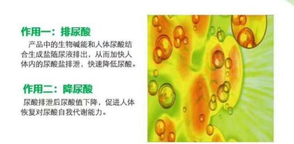 葵花盘碱降尿酸的原理.png