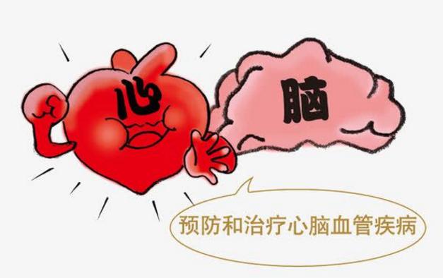 小分子肽对心脑血管的作用.png