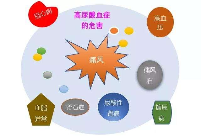 尿酸高主要原因是什么?如何才能降尿酸?